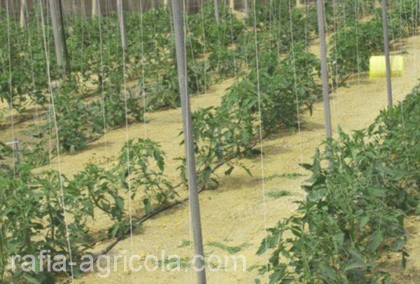 malla espaldera en cultivo de hortalizas.