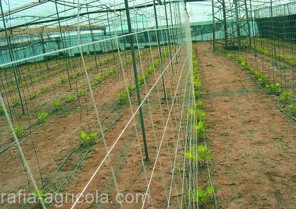 uso de HORTOMALLAS en cultivo de cucurbitáceas